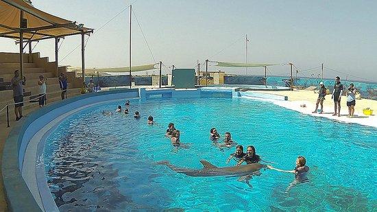 Mediterraneo Marine Park: Dolphin caresses...