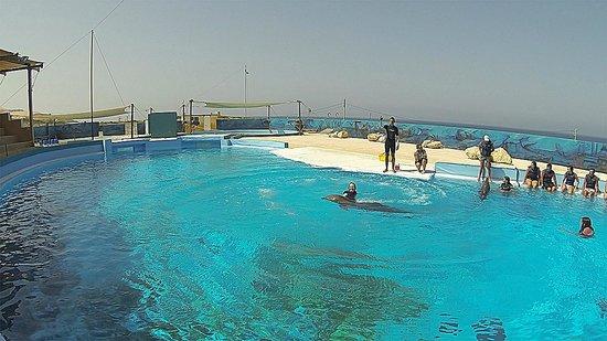 Mediterraneo Marine Park: Dancing with dolphin...