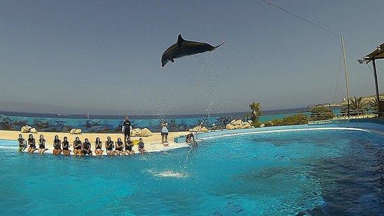 Mediterraneo Marine Park: Dolphin jumping ...