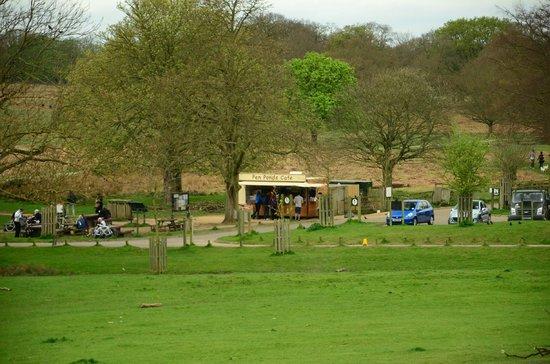 Richmond Park: Pen Ponds Cafe
