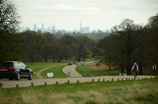 Richmond Park: The road...inside the park