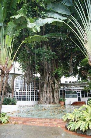 El San Juan Resort & Casino, A Hilton Hotel: magnifique arbre