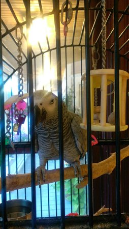 Old Stagecoach Inn: Sophie the African Grey Parrot