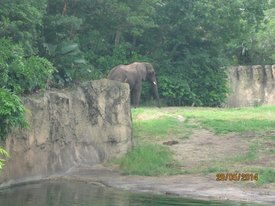 Disney's Animal Kingdom: слон