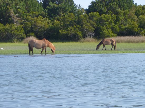 Waterbug Tours: Horses from the boat