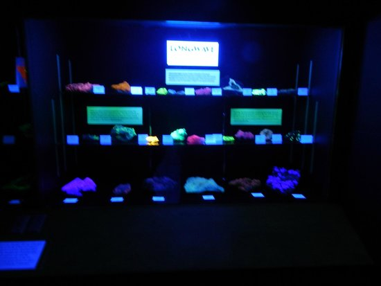 MBMG Mineral Museum : One of two fascinating displays of minerals under black light.