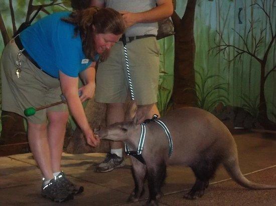 "St. Louis Zoo: Animal ""show"" in children's zoo"
