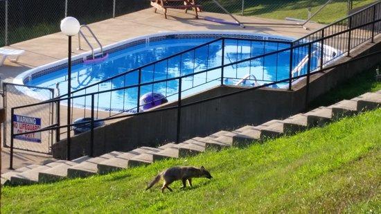 Pointe West Resort Motel: Fox