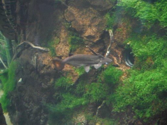 Shedd Aquarium: a weird looking fish