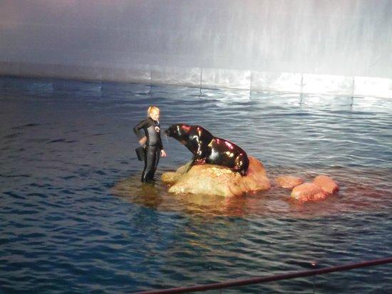 Shedd Aquarium: part of the show
