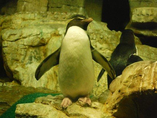 Shedd Aquarium: a pinguin possing