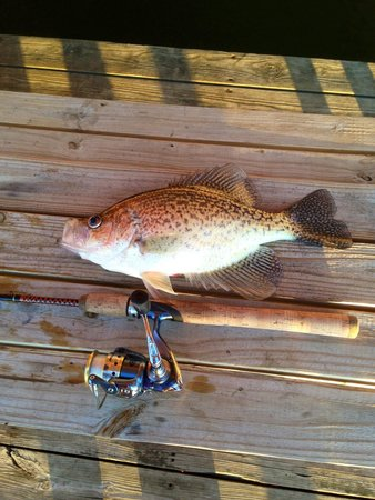 Three Oaks Resort On Lake Norfork: Fabulous crappie fishing from our dock!