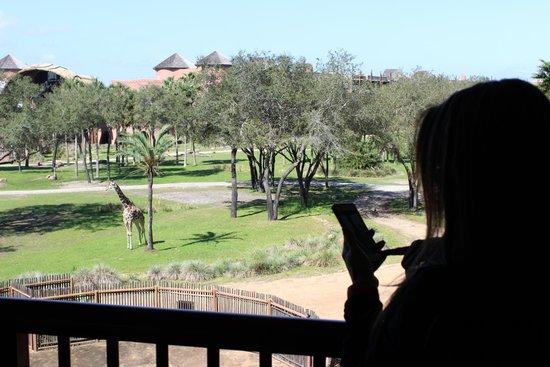 Disney's Animal Kingdom Lodge: Savannah view from room