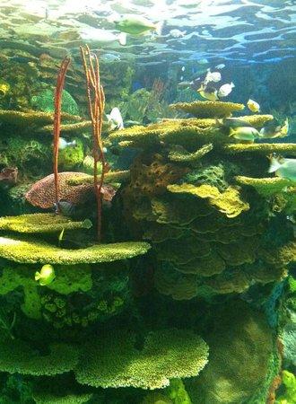 Ripley's Aquarium Of Canada: Beautiful sea life