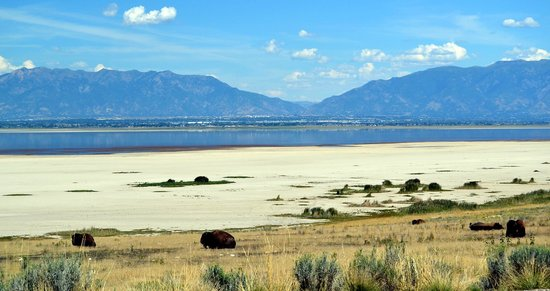 Antelope Island State Park : Water is really low right now so lots of beach and farther to walk to get to the water