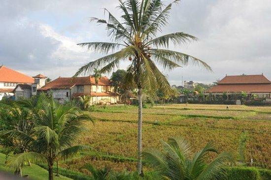 Alaya Resort Ubud: View on rice fields from the room