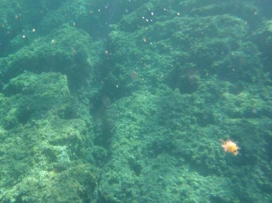 Friend in France Tours: Underwater shot of flora and fauna in the Bay of Villefranche