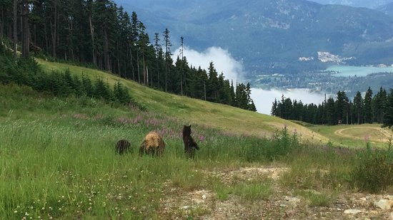 Four Seasons Resort and Residences Whistler: bear tour