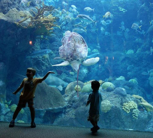 The Florida Aquarium: Kids playing with Turtle