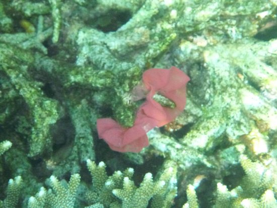 El Nido Resorts Miniloc Island: Some weird sea creature. lol