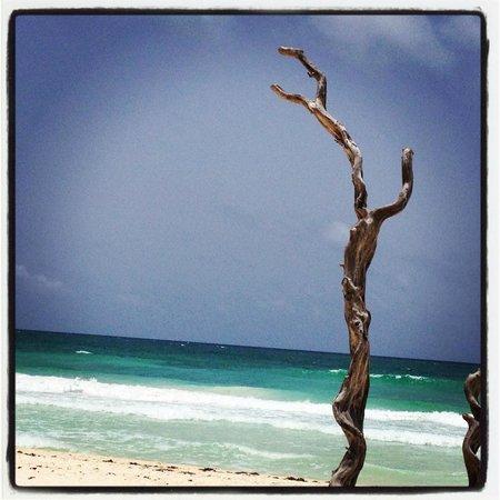 Luv Tulum: Driftwood, Sea & Sky