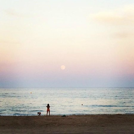 Hotel La Familia Gallo Rojo: Playa de Campello