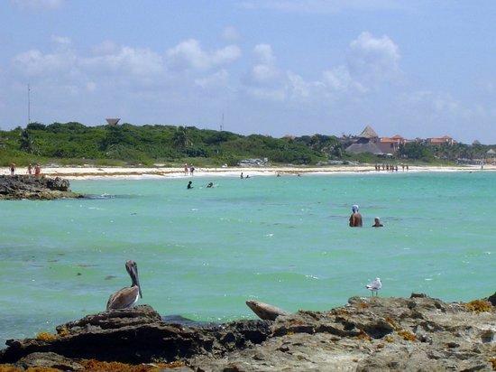 Iberostar Quetzal Playacar: praia na reserva a 200 metros do hotel
