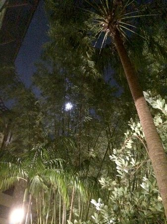 Loews Royal Pacific Resort at Universal Orlando: Moonlight through the palms by the pool