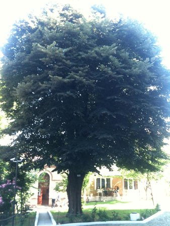 LaresPark Hotel: tree