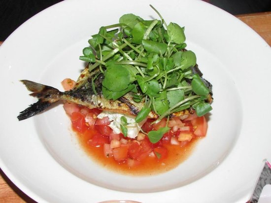The Shed: Mackerel