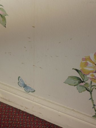 Waterford Lodge Hotel: dirty  walls