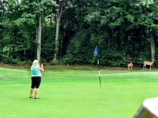 Comfort Suites : Brae Golf Course Hole #4 Deer