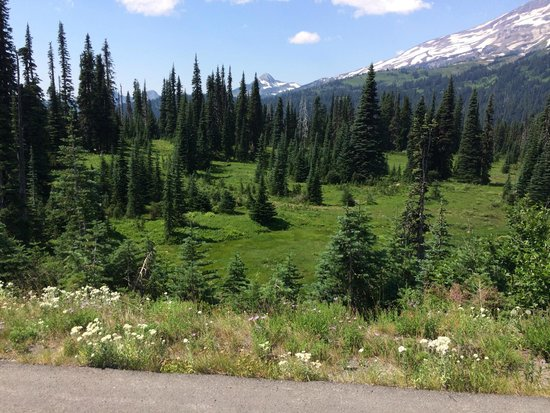 Mount Rainier : We saw a bear cub in the meadow.
