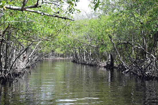 Speedy's Airboat Tours : Everglades (1)