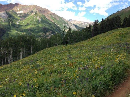 Grand Lodge Crested Butte : Trail 401
