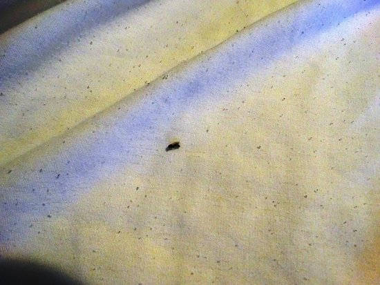 Avenue Inn: Died insects inside the bed sheets