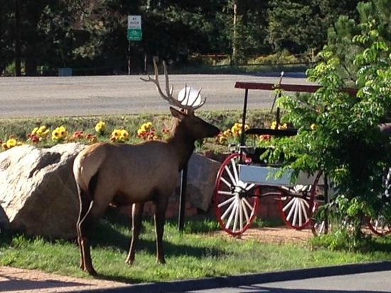 Saddle & Surrey Motel: Morning coffee with the local wildlife!