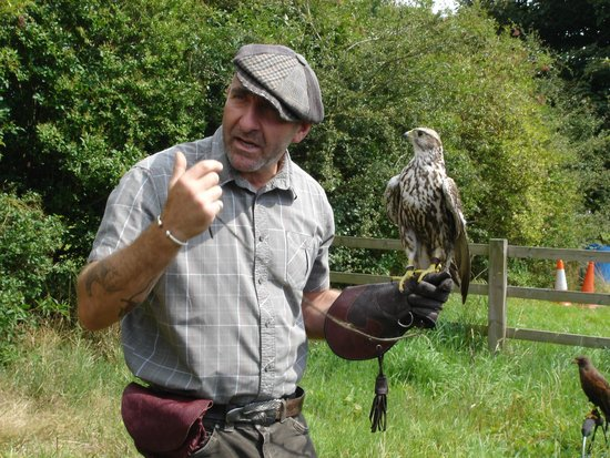 Chris Miller - Falconry Experience Days-Day Tours: August 2014