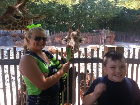 Zoo Atlanta : kids loved getting up close to feed giraffes