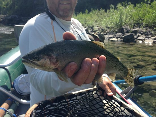 Glacier Anglers: North Fork Flathead - Cutthroat Trout