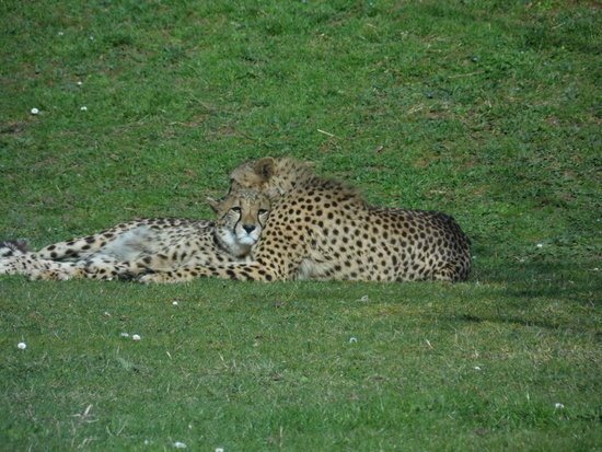 Zoo de La Fleche: Zoo de la Flèche
