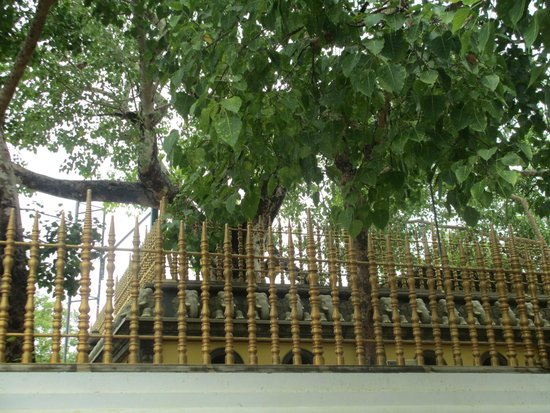 Jaya Sri Maha Bodhi: The Sacred Bo Tree