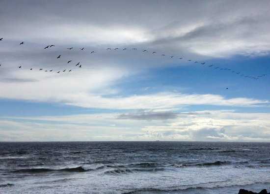 Clatsop Spit: Birds in Flight