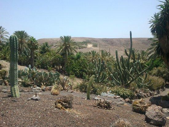 Giardino botanico - Picture of Oasis Park Fuerteventura, Fuerteventura - Trip...