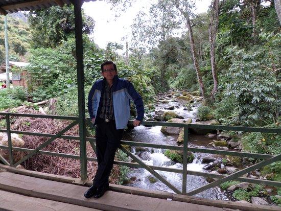 Sueños del Bosque: Sobre el puente