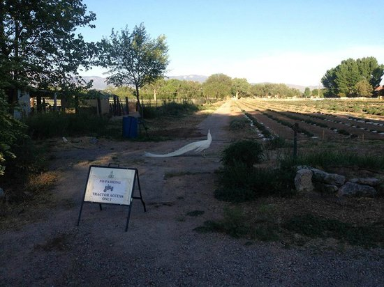 Los Poblanos Historic Inn & Organic Farm: Lavender fields and Albert the white peacock
