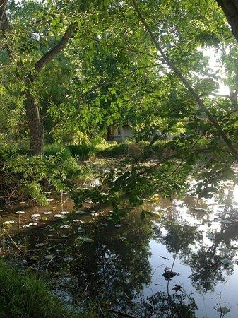 Los Poblanos Historic Inn & Organic Farm: Pond in the morning