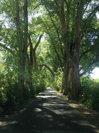 Los Poblanos Historic Inn & Organic Farm: View up the drive