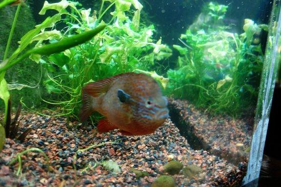 Tennessee Aquarium: fish
