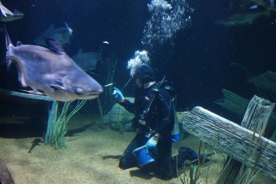 Tennessee Aquarium: feeding time